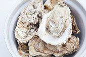 Oyster shells in a white bowl, Alaska, United States of America
