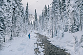 man hiking at a river at Yoho National park, Emerald lake, Yoho National Park, British Columbia, Kanada, north america