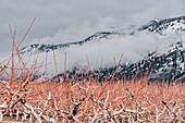 Abraham Lake, Abraham Lake, Jasper National Park, Alberta, Kanada, north america