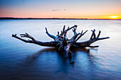 tree, root, Schlei, Weseby, Missunde, Schleswig, Schleswig Holstein, Germany