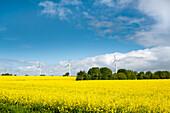 Wind turbines and rape field, Baltic coast, Schleswig-Holstein, Germany