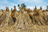Schilf zum Verkauf an den Ufern des Tanganjikasee, Bujumbura, Burundi, Afrika