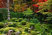 Zen-Garten im Herbst, Sanzen-in-Tempel, Kyoto, Japan, Asien