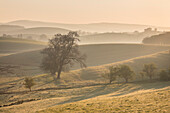 Rolling countryside and hills illuminated by the first light of the day near Skipton, North Yorkshire, Yorkshire, England, United Kingdom, Europe