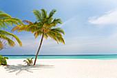 Tropical beach scene, Coco Palm Resort, Dhuni Kolhu, Baa Atoll, Republic of Maldives, Indian Ocean, Asia