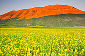 Europe,Italy,Umbria,Perugia district,Sibillini National park, Flowering of the lentil fields of Castelluccio of Norcia