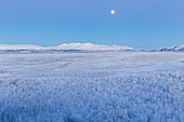 The moon rise over Lapland forest, Abisko, Abisko National Park, Norbottens Ian, Sweden,Europe