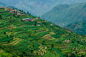 'Ramechhap, Nepal, Asia, Green terraces in the Nepalese countryside around Ramechhap, Picture taken during the ''Indigenous People Trek'', Nepal, Asia'