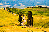 Rolling Hills in Orcia valley, Tuscany district, Siena province, Italy, Europe