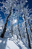 Vollmond leuchtet den verschneiten Wald, Abisko, Gemeinde Kiruna, Norrbottens län, Lappland, Schweden