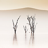 Lake Nakuru, Kenia, bei Sonnenaufgang. Das überflutete Baummuster, das 2014 durch den Anstieg der alkalischen Gewässer des Sees entstanden ist, wurde rasch von Wasservögeln besiedelt.