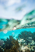Schnorcheln während einer Reise durch die Windward Islands der Kleinen Antillen der Karibik