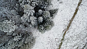aerial and graphic view of a trail on the edge of a forest of Spruce covered with snow and frost in Saint-Cergue in the Vaud Canton, Switzerland