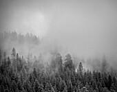 Nebel durch die Bäume