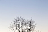Nature photograph with bare trees against clear sky, Phippsburg, Maine, USA