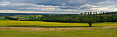 France, Dordogne, panoramic view of a sunflowers field. Round beller in the foreground, forest in the background