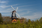 Windmill Westeraccum in the evening light, Dornum, Ostfriesland, Lower Saxony, Germany
