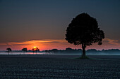 Tree on pasture in fog at sunrise, Priemelsfehn, Friedeburg, Wittmund, Ostfriesland, Lower Saxony, Germany