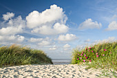 Dune path at the German North Sea, Wattenmeer National Park, Schillig, Wangerland, Landkreis Friesland, Lower Saxony, Germany
