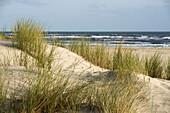 Sand dunes in the morning light, Spiekeroog, German North Sea, Wattenmeer National Park, Ostfriesland, Lower Saxony, Germany