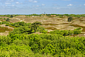 Forest and brown dunes under blue sky, Spiekeroog, Ostfriesland, Lower Saxony, Germany