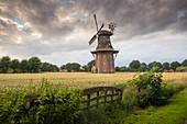 Windmill Holtland in rye field in the evening light, Hesel, Leer, Ostfriesland, Lower Saxony, Germany