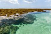 Seelandschaft von natürlichen Pools an Riffen, Boipeba Island, South Bahia, Brasilien