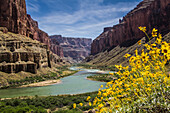 Wildflowers grow from the hillside with a view down the Grand Canyon in the background