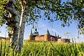 Kalmar Schloss Aussenasicht mit Birke und hohem Schilf im Vordergrund , Schweden