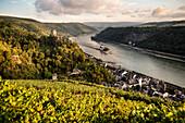 UNESCO World Heritage Upper Rhine Valley, Gutenfels castle and Pfalzgrafenstein castle, grapevine, Rhineland-Palatinate, Germany