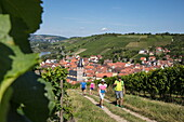 Two couples enjoy stroll through vines at Marsberg vineyard, Randersacker, near Würzburg, Franconia, Bavaria, Germany
