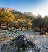 Deià, Westcoast, Serra de Tramuntana(UNESCO-Heritage), Mallorca, Balearics, Spain
