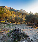 Deià, Westküste, Serra de Tramuntana(UNESCO-Welterbe), Mallorca, Balearen, Spanien