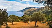 Banyalbufar, Serra de Tramuntana (UNESCO-Welterbe) , Mallorca, Balearen, Spanien
