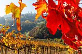 townscape, vineyard, San Gimignano, hilltown, UNESCO World Heritage Site, province of Siena, autumn, Tuscany, Italy, Europe