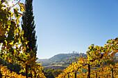 townscape, vineyard, cypress, San Gimignano, hilltown, UNESCO World Heritage Site, province of Siena, autumn, Tuscany, Italy, Europe