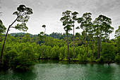 Mangrove forest in the marine park on Lampi Island in the Myeik Archipelago, Myanmar