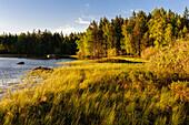 Kleiner See mit Schilf am Ufer , Schweden
