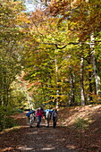 Woman and man with two donkeys walk om path through forest near Aubachseen in autumn , Habichsthal, Spessart-Mainland, Franconia, Bavaria, Germany