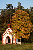 Small chapel and tree with autumn foliagenear Klingenberg, Spessart-Mainland, Franconia, Bavaria, Germany