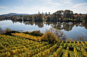 Vineyard near Schloss Johannisburg Palace along Main river in autumn, Aschaffenburg, Spessart-Mainland, Bavaria, Germany