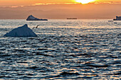 sunset over the icebergs in the ice fjord, jakobshavn glacier, 65 kilometres long, coming from the inlandsis, sermeq kujalleq, ilulissat, greenland