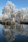 winnowing on the banks of the risle river, frost in the white trees of winter, rugles (27), france