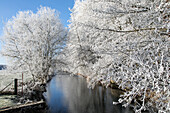 banks of the risle river with the frost in the white trees of winter, rugles (27), france