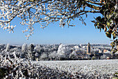 frost in the white trees of winter, rugles (27), france