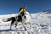 arvin berod nicolas with his 2-year-old border collie jango approaching the review area for cross-country skiing, reporting on avalanche dog handlers, training organized by the anena with the approval of the civil security department, les-2-alpes (38), fr