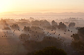 Flock of birds flying above atmospheric misty early morning landscape of trees and hills around Samode, Rajasthan, India, Asia