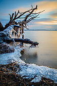 tree, root, Schlei, ice, Weseby, Missunde, Schleswig, Schleswig Holstein, Germany