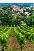 France, Gironde, AOC Castillon Cotes de Bordeaux vineyard, vines on the hillside near Castillon-la-Bataille