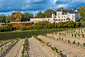 France, Gironde, Chateau de la Riviere in the AOC Fronsac wine-growing region, planting of new vines